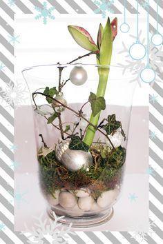 Weihnachtsdeko im Glas | Videkiss #amaryllisdeko Weihnachtsdeko im Glas | Videkiss #weihnachtsdekoglas