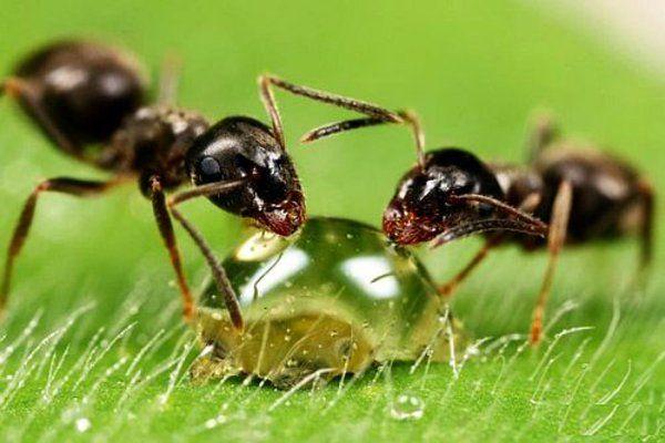 Ameisen Bekampfen Im Haus Und Im Garten Hausmittel Gegen Ameisen Hausmittel Gegen Ameisen Ameisen Ameisen Im Garten