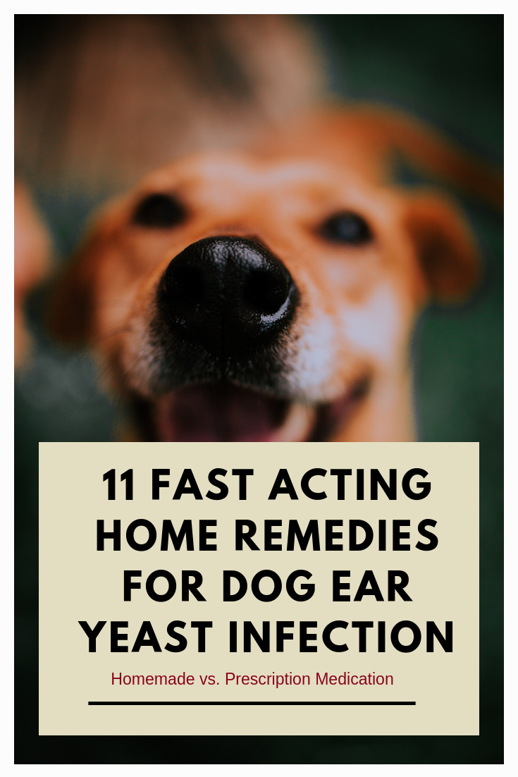 11 Fast Acting Home Remedies For Dog Ear Yeast Infection | !! Smart