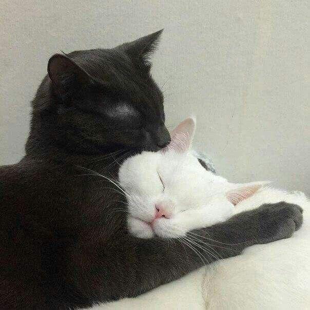 Gatitos Enamorados Gatoss Pinterest Cat Animal And Kitty