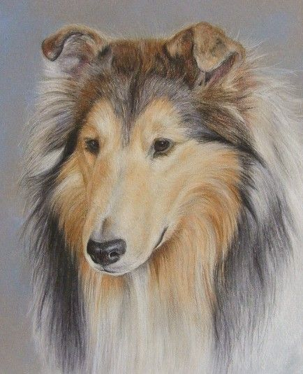 Rough Collie By Katrina Ann On Artwanted Dog Portraits Dog