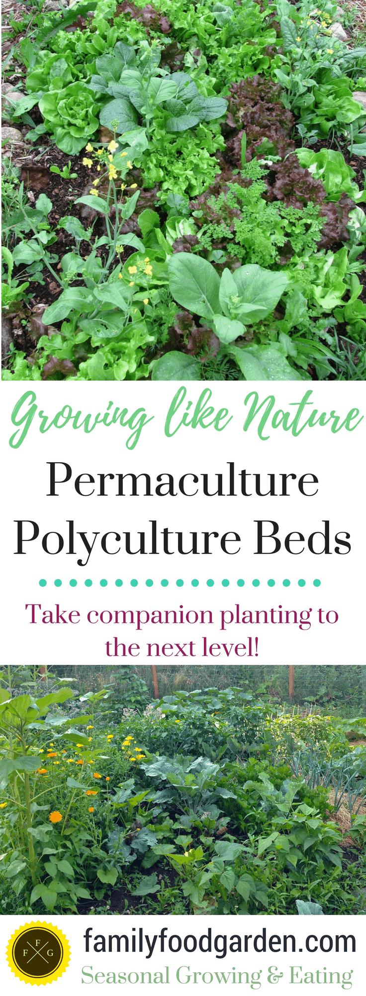 Polyculture permaculture gardening #vegetablegardening ...