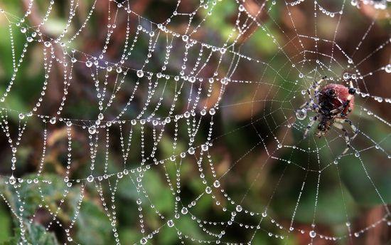 Los secretos de la tela de araña