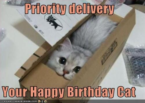 Priority delivery Your Happy Birthday Cat | LOL | Cat