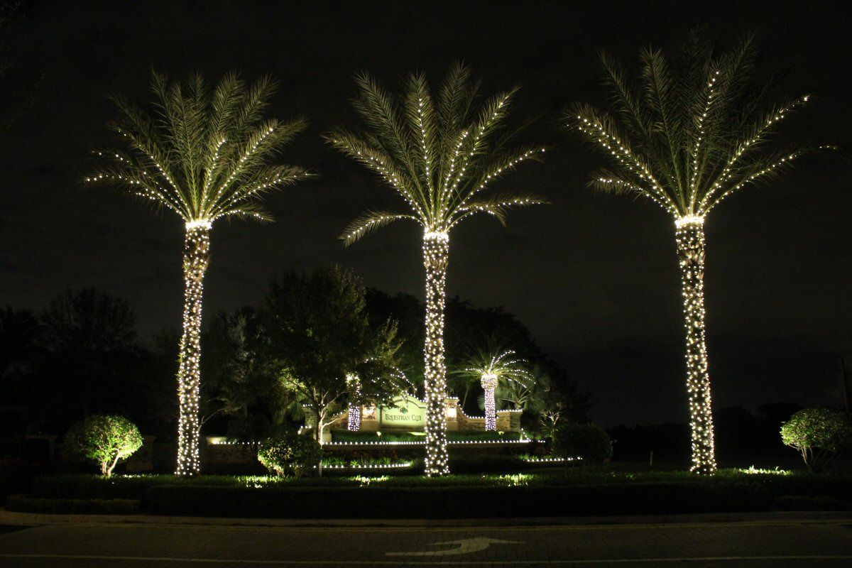 Lights On Medjool Date Palms Winter In Vegas