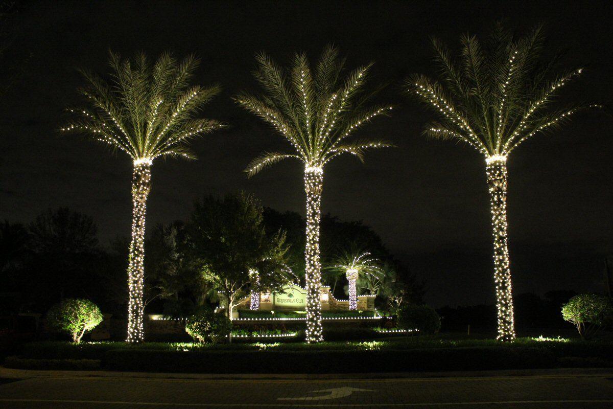 Lights On Medjool Date Palms Winter In Vegas Christmas
