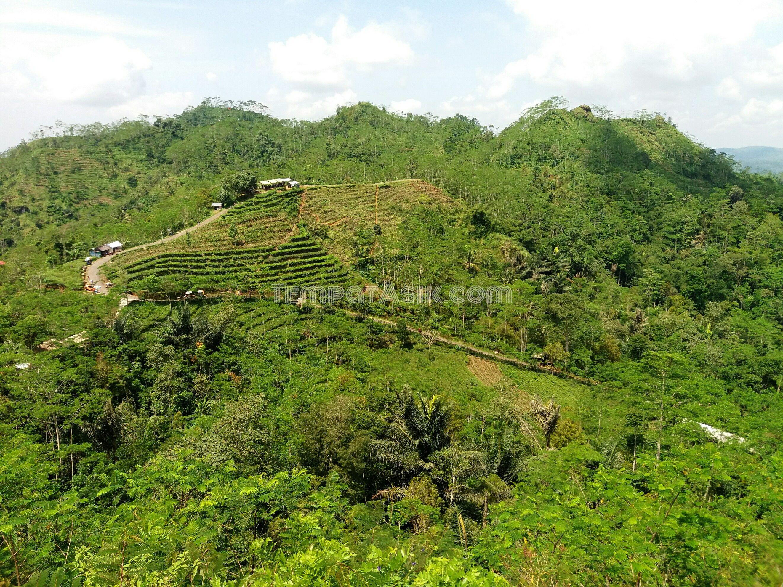Wisata Kebun Yogyakarta