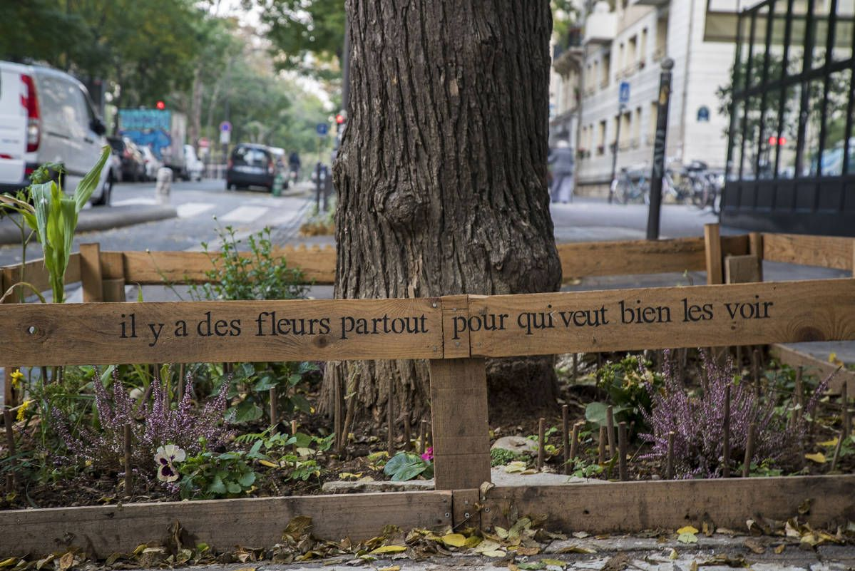 Kukkaistutuksia puun juurella pariisilaisen kadun varressa.