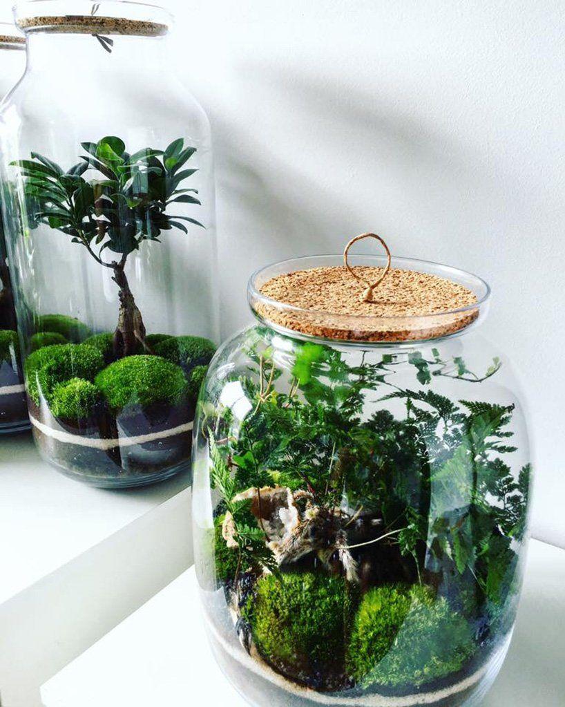 Jak Zrobic Las W Sloiku Wlasny Ekosystem W Sloiku Inspiracje Small Terrarium Succulent Terrarium Garden Terrarium
