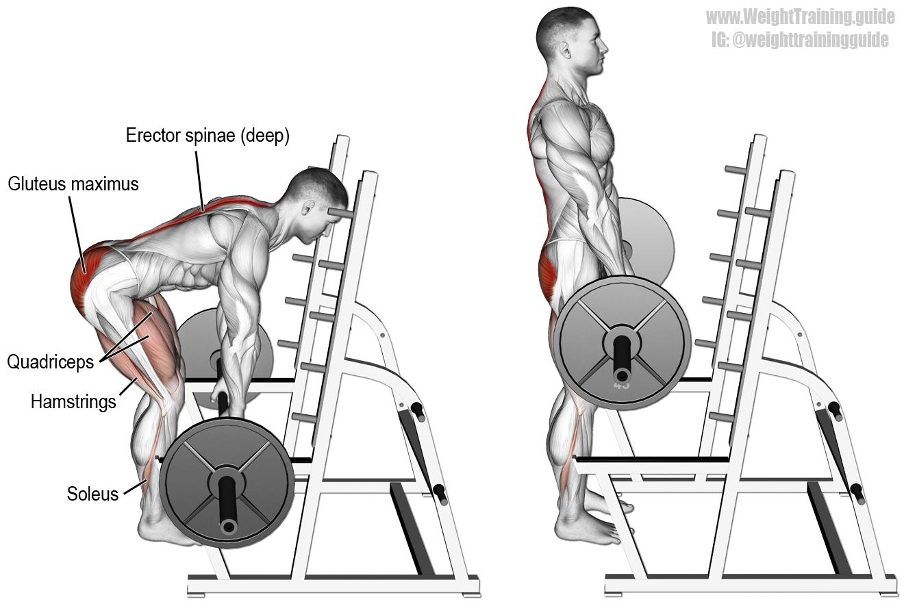 deadlift-back-muscles