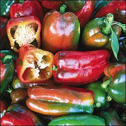 Napoleon Sweet Pepper Stuffed Sweet Peppers Stuffed Peppers Sweet Bell Peppers