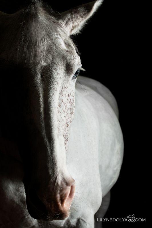 grey horse by Лилия Недоля, via 500px