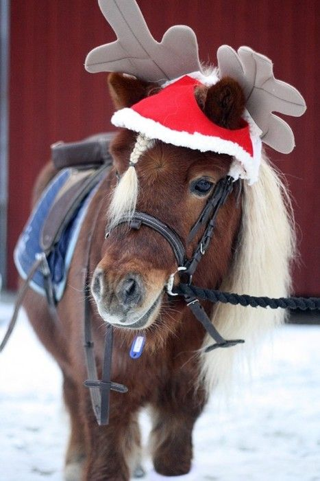 REINDEER ANTLERS CHRISTMAS FANCY DRESS HORSE PONY NEW EQUESTRIAN