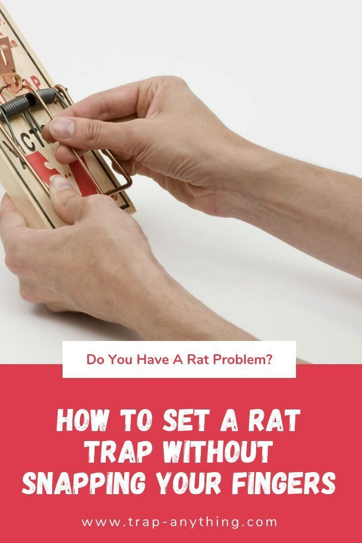 how to set a victor mouse trap with plastic pedal