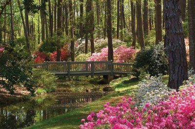 Calloway Gardens is a 13000 acre resort in Pine Mountain Georgia