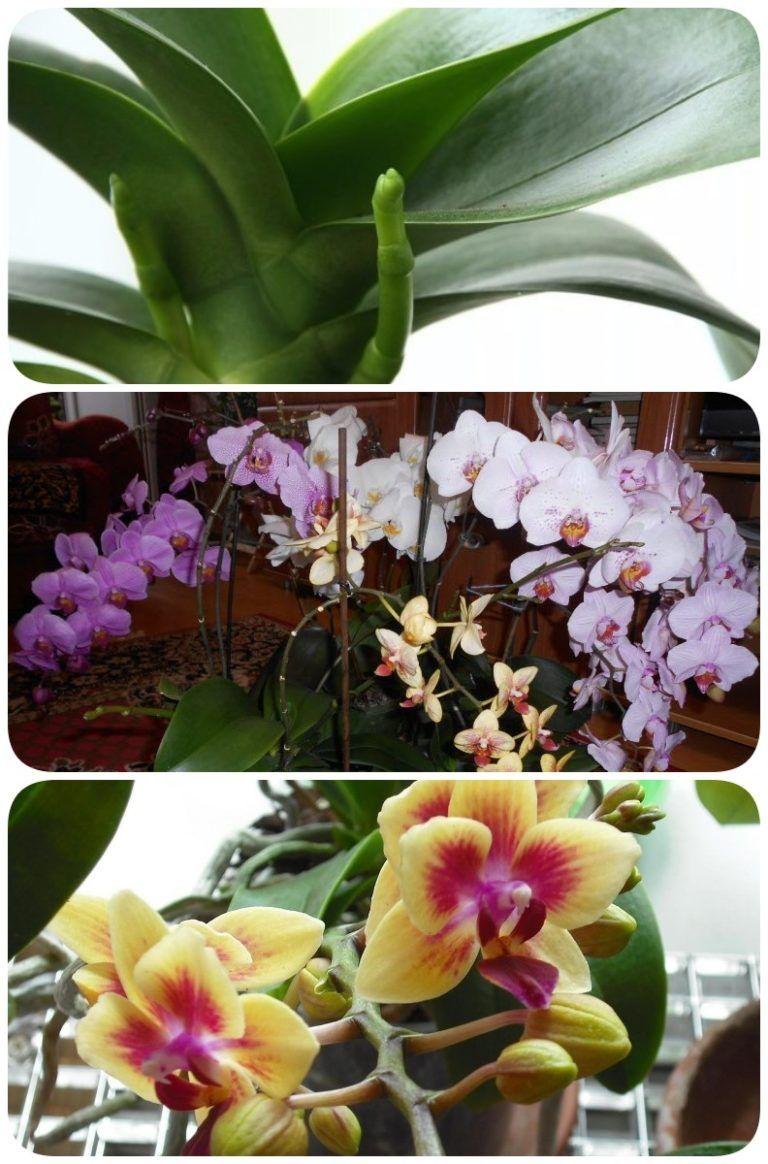 Тепличка для орхидеи своими руками фото 951