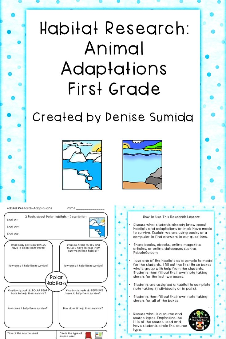 This beginning note taking lesson focuses on the adaptations animals have  made to survive in various habi…   Animal adaptations [ 1102 x 735 Pixel ]