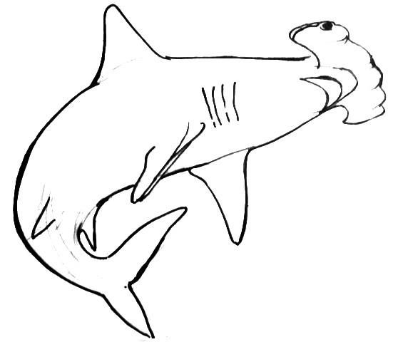 how to draw a hammerhead shark two step by step hammerhead drawing lessons