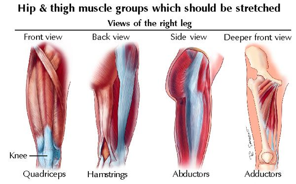 17++ What is an abductor muscle ideas in 2021