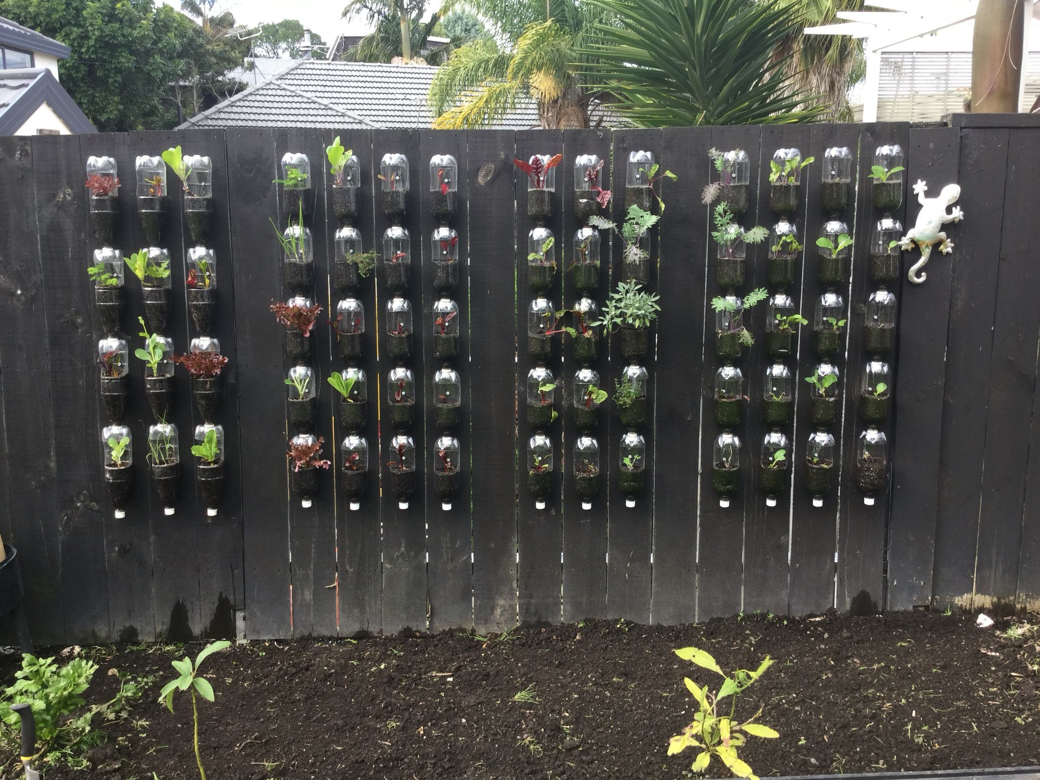 plastic bottle wall garden recently planted with herbs