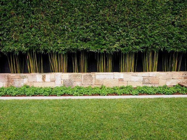 privacy plants ideas garden landscape