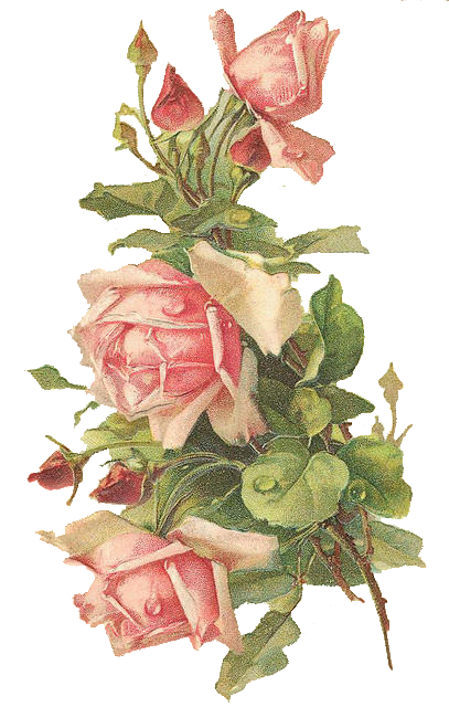 Catherine Klein Pink Roses Digital Elements The Soul Of The Rose