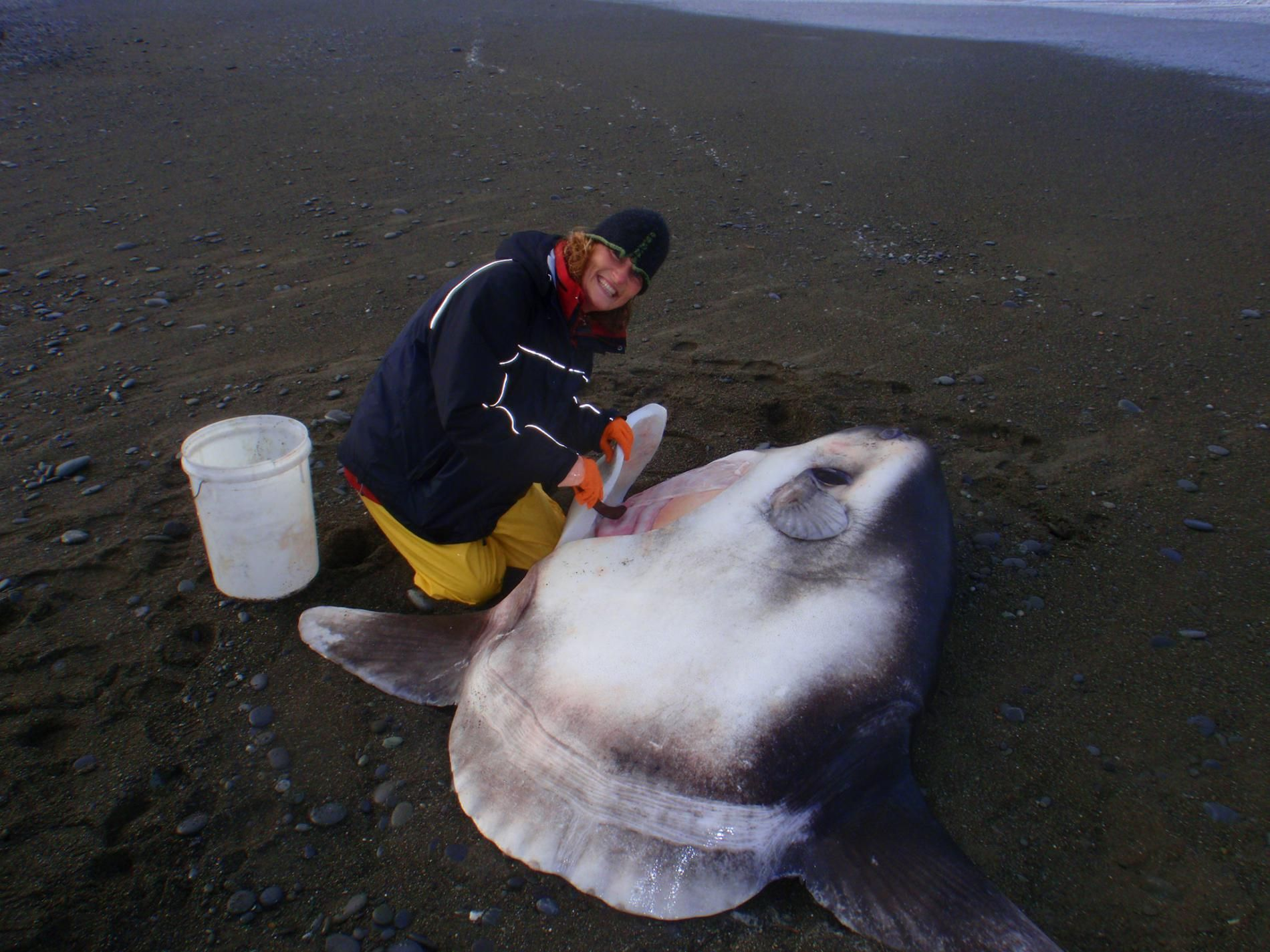 Massive Two Ton Fish Species Discovered Fish Species Weird Creatures