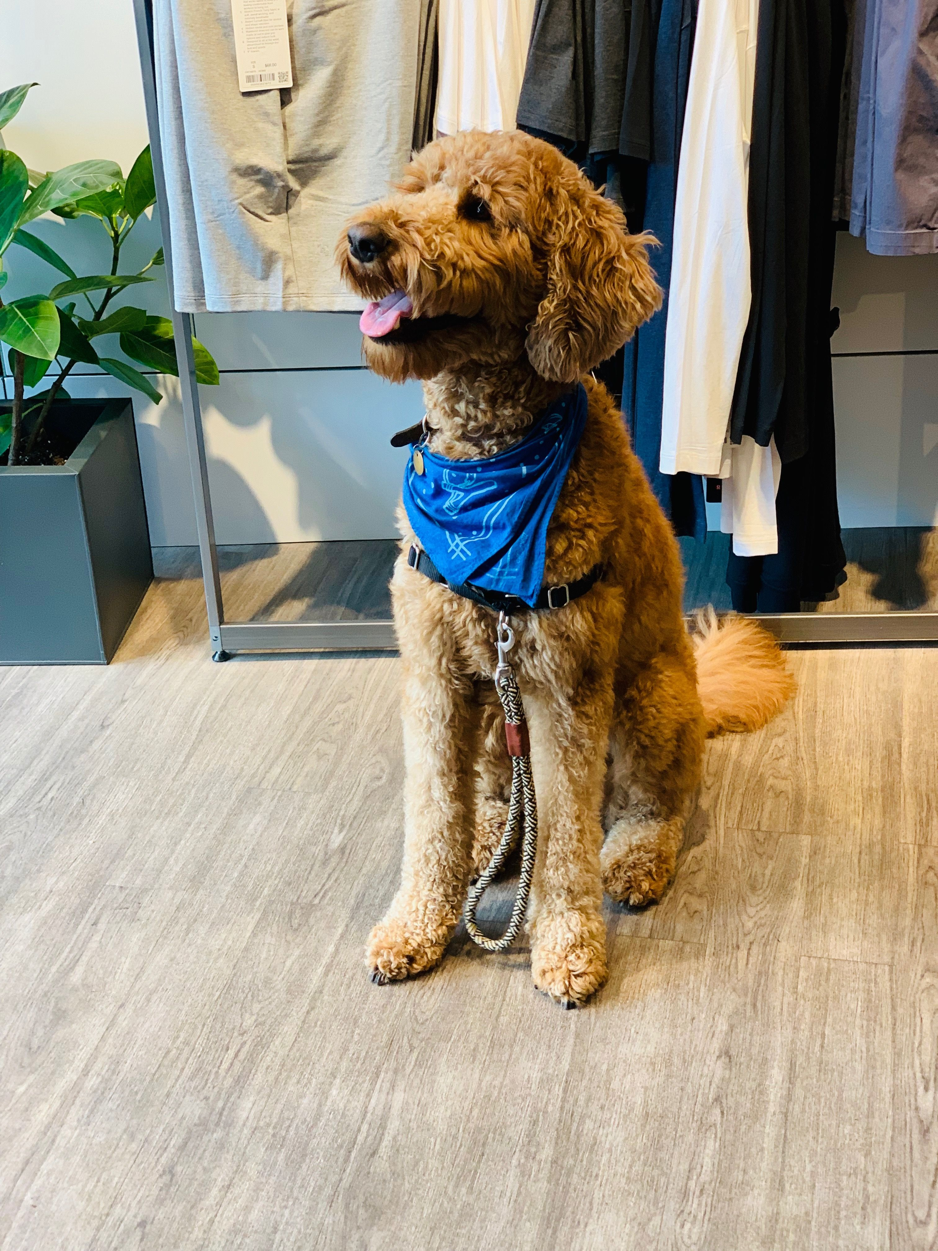 Black Tan Dog Shorti Line Leash Coast Brands Makes Stylish Dog Leashes Dog Collars And Dog Harnesses Made Out O Dog Harness Handmade Dog Leash Girl And Dog