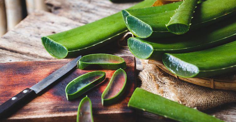 فوائد الصبار للبشره والشعر وكيفية استخدامه بشرة وشعر Aloe Vera Plant Aloe Vera For Skin Aloe Vera Benefits