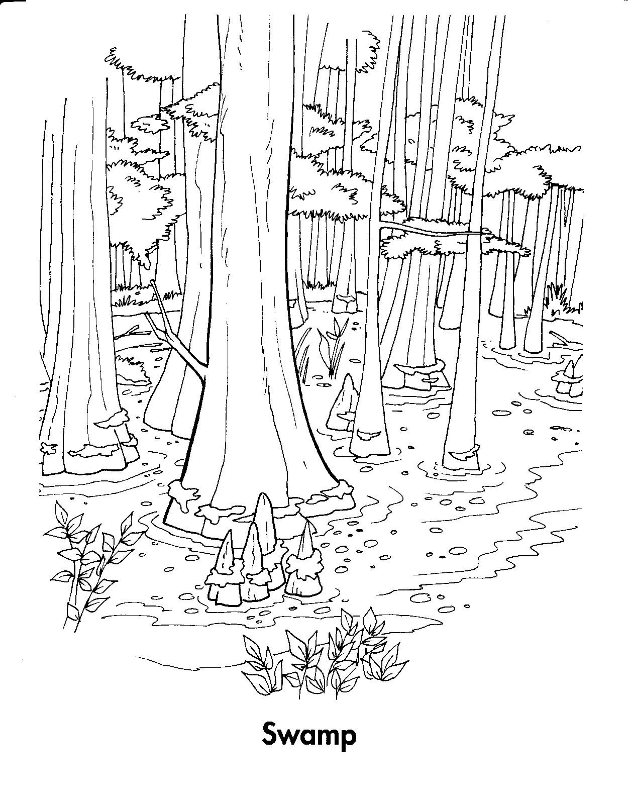 Forest Habitat Coloring Pages In