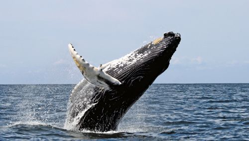I have to whale watch someday. One of the things on my bucket list!
