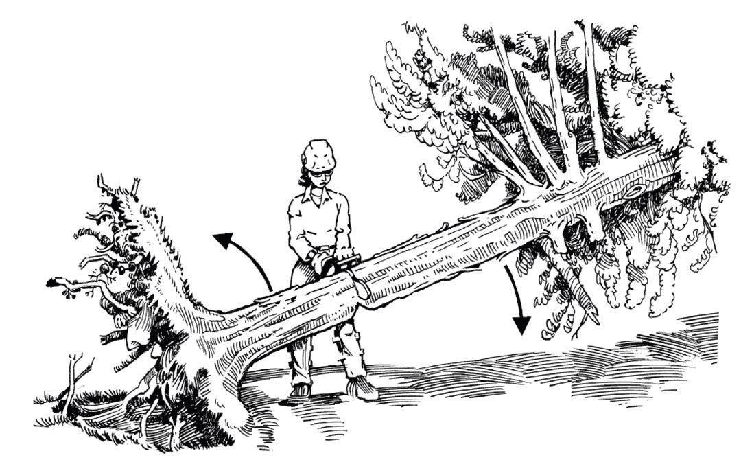 Understanding The Hazards of Felling StormDamaged Trees