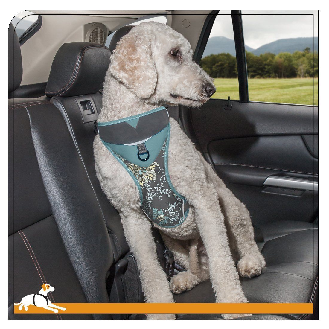 Kurgo Muted Floral Dog Harness >>> Check out this great product. (This is an Amazon affiliate link)