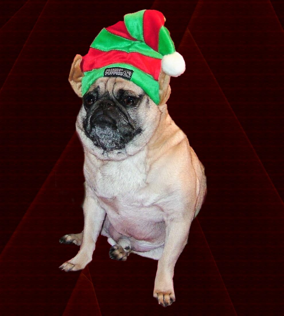Happy holidays from harley pugmass pinterest