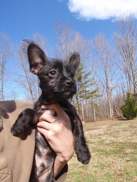 Dog Finder Adopt A Dog Or Cat Near You Dog Finder Dogs