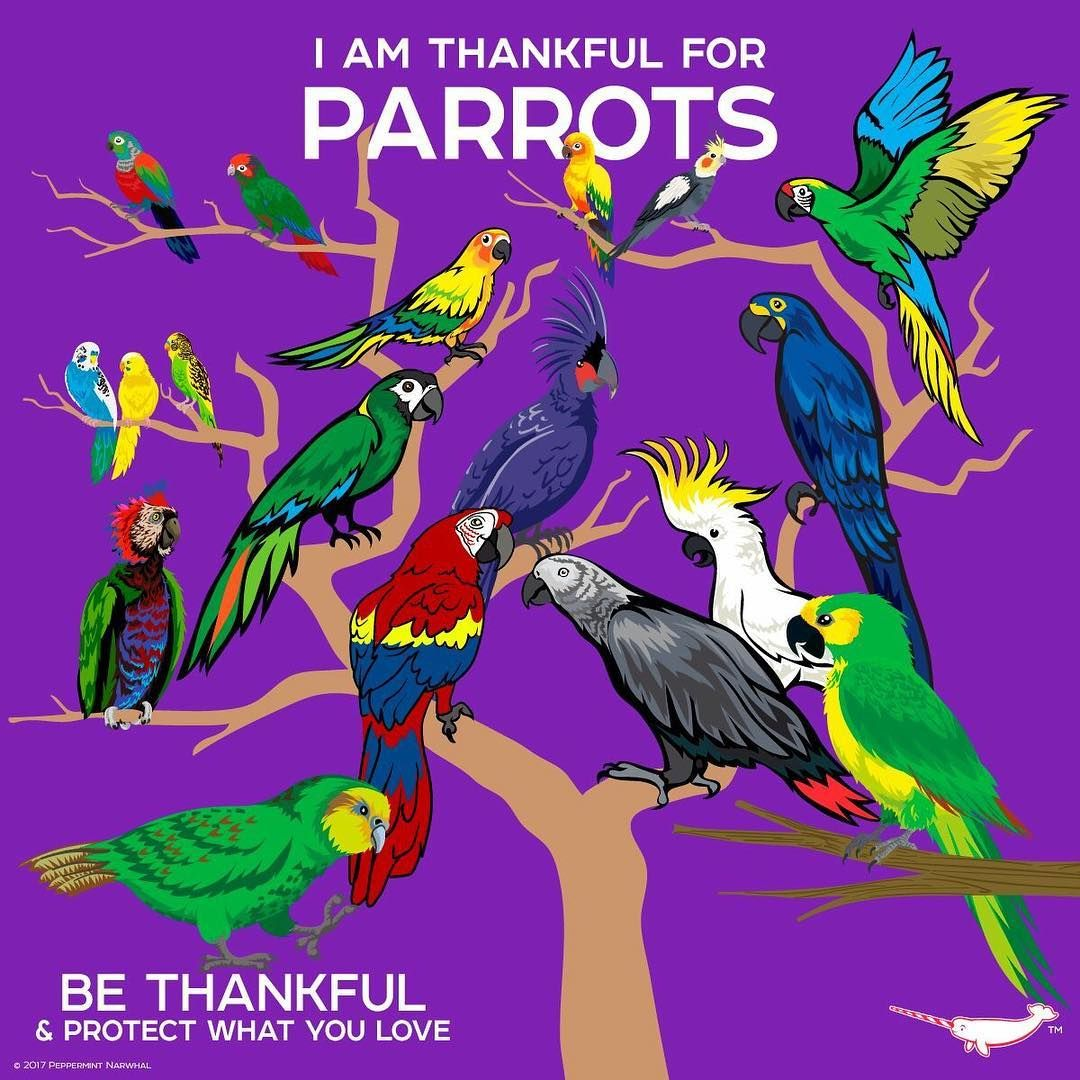 Parrots Need More Conservation Awareness Than People
