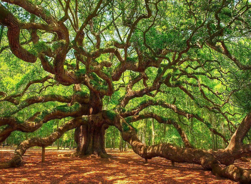 лежащее дерево картинки себе