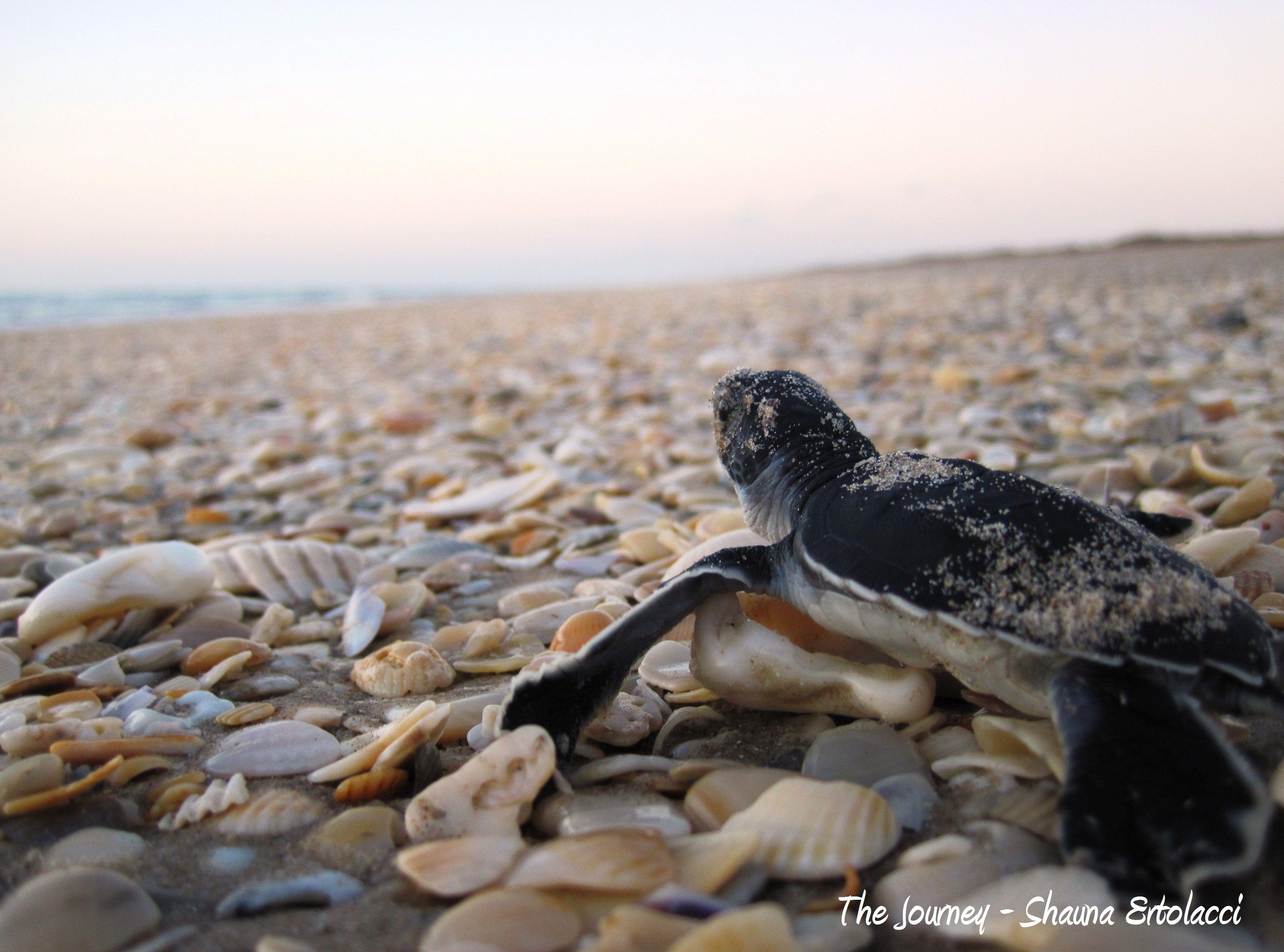 The journey, NPS photo by Shauna Ertolacci