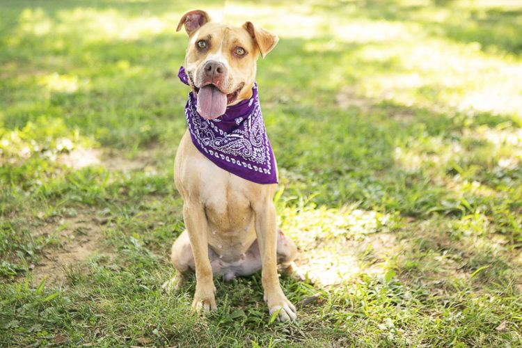 Adopt Me Rutherford County PAWS Daily Dog Tag Dog