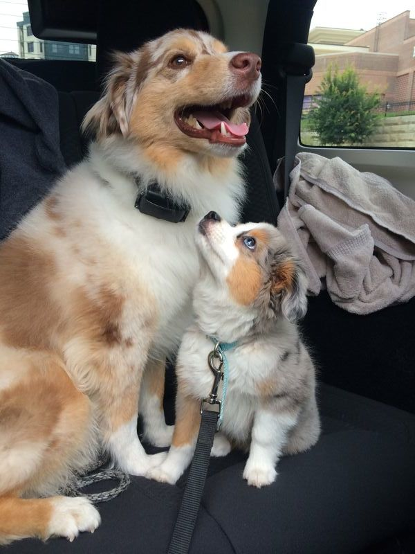 18 Puppies Looking At Their Futures