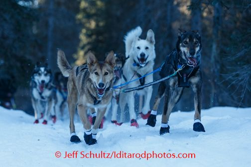Joar Leifseth Ulsom Lead Dogs Run On The Trail After Leaving The