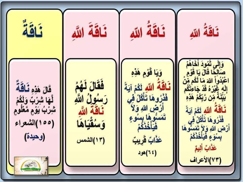ناقة أربع مرات في القرآن ثلاث مرات مضاف ناقة الله ووحيدة منونة ناقة لها شرب في الشعراء ١٥٥ Bullet Journal Supplies Journal