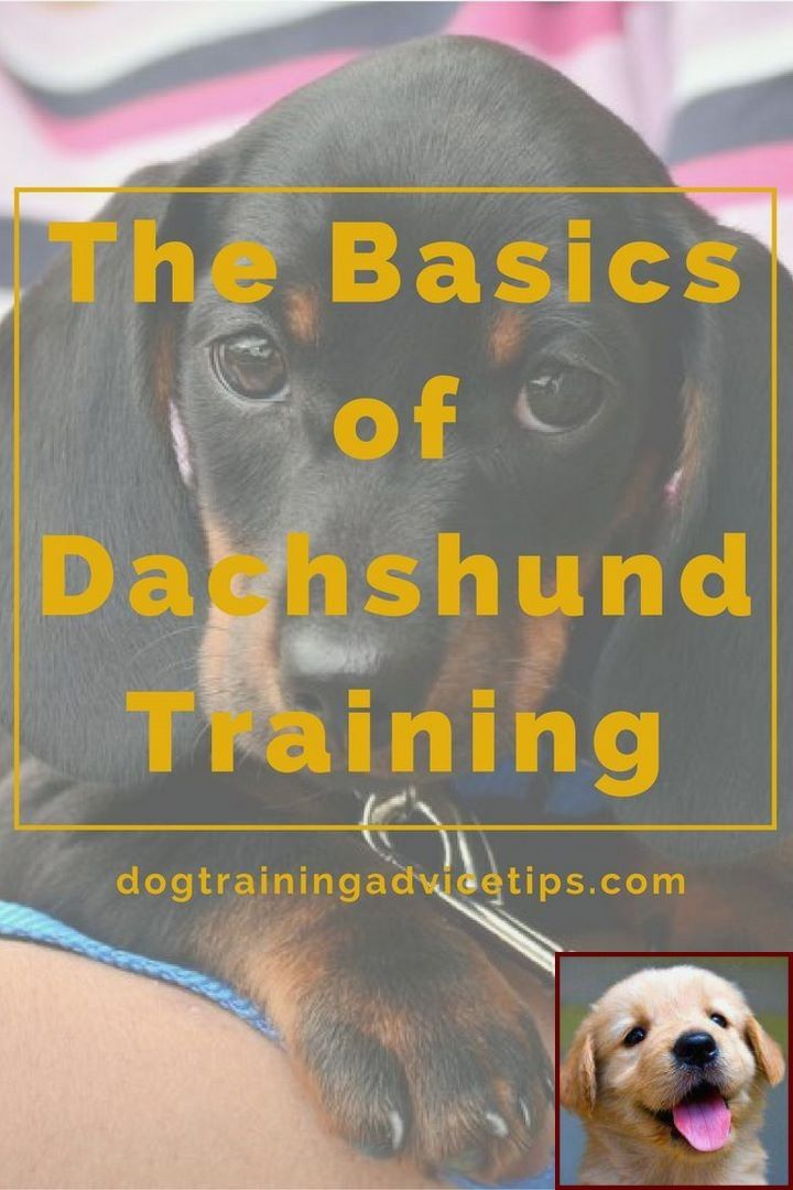 House Training A Puppy Bell Method And Dog Behavior Hiding In