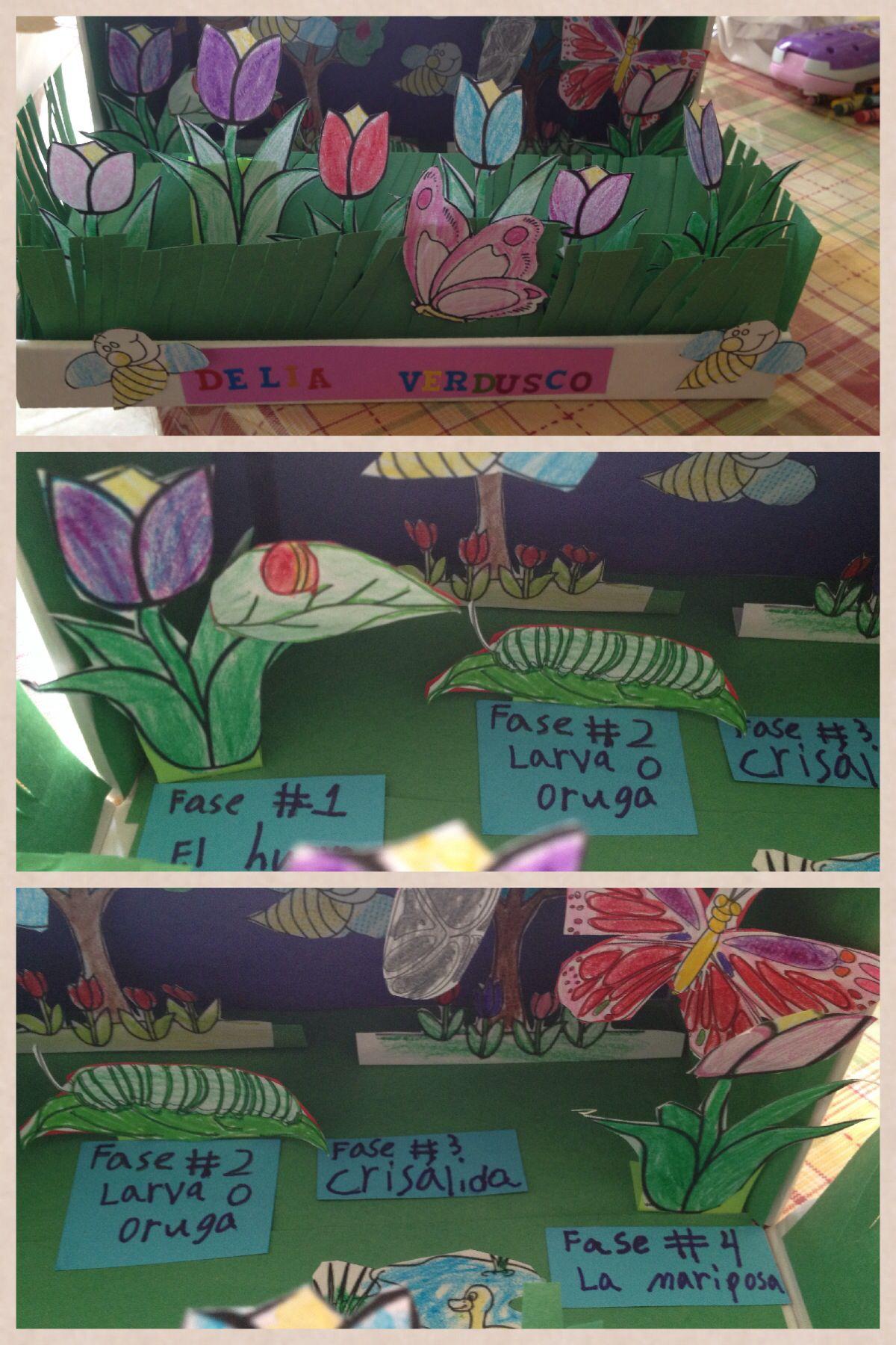 1st Grade Butterfly Diorama