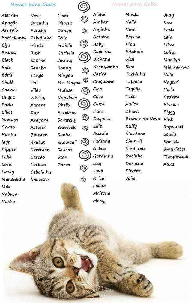 Nomes Para Gatos Girl Cat Names Kitten Names Kitten Names Girl