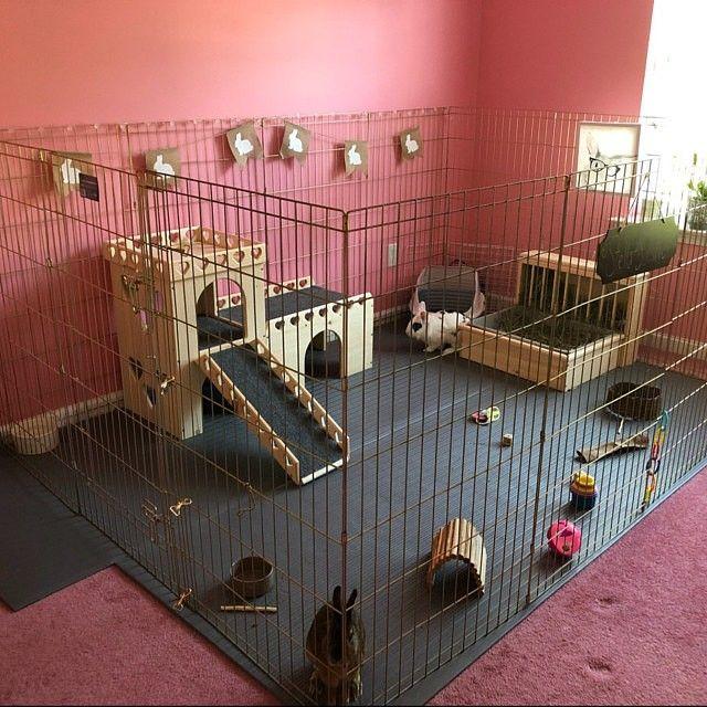 Etsy Bunsbedsandbeyondさんのショップレビューより Pet Bunny Rabbits Bunny Cages Diy Bunny Cage