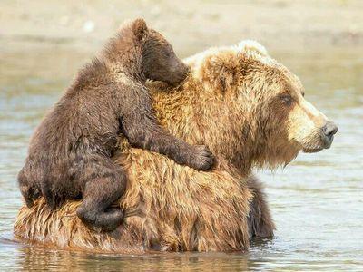 Ми подумали, що вам сподобаються ці дошки • gudzee@ukr.net #bears
