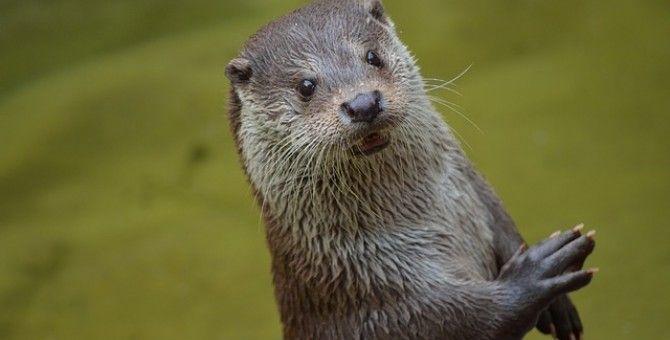 Otter Attacks Boy and Grandma