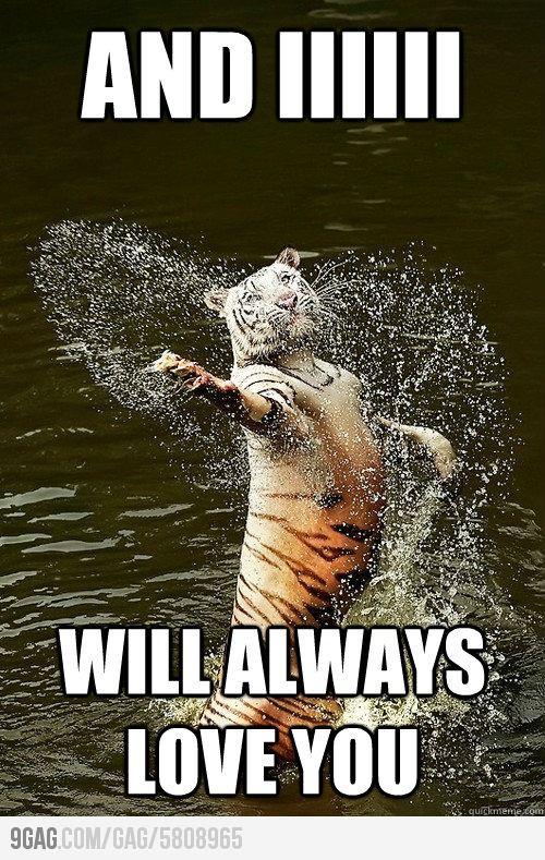 Romantic Water Tiger Funny Animal Memes Animal Captions Funny Animals