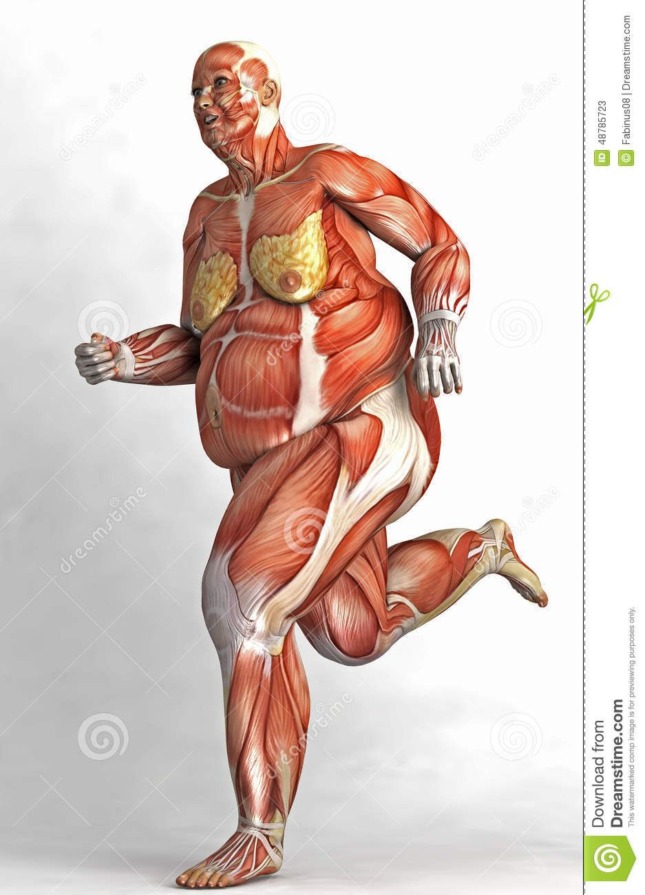 In The Human Body Organs Diagram Of Obese - House Wiring Diagram ...